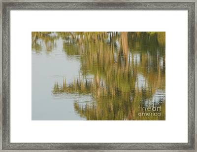 Swamp Reflections Framed Print by Kelly Morvant