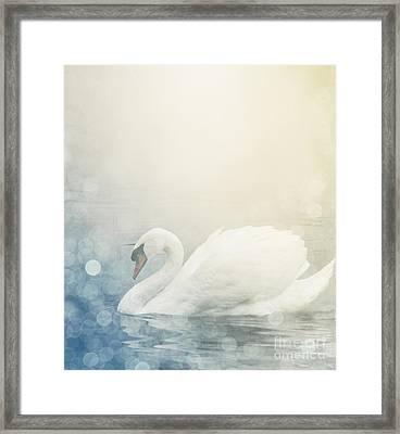 Swan Framed Print by Jelena Jovanovic