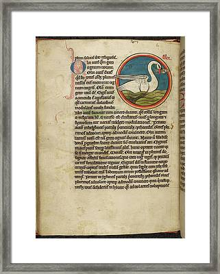 Swan With A Fish In It's Beak Framed Print by British Library