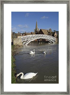 Swans At The Chinese Bridge Framed Print by Keith Douglas