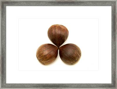 Framed Print featuring the photograph Sweet Chestnuts Fruits by Fabrizio Troiani