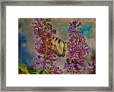 Sweet Nectar Framed Print by Deborah Benoit