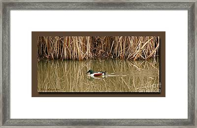 Swimming Among The Reeds Framed Print