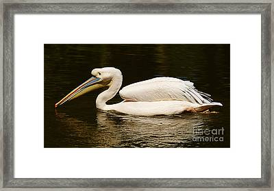 Swimming Pink Pelican Framed Print