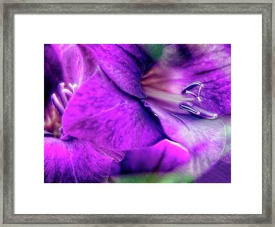 Sword Lily (gladiolus Hybrid) Framed Print by Maria Mosolova/science Photo Library
