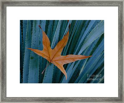 Sycamore Leaf And Sotol Plant Framed Print by John Shaw