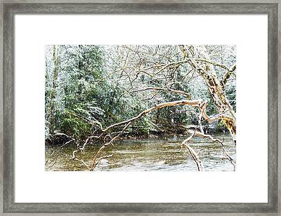 Sycamore Snow And Williams River  Framed Print by Thomas R Fletcher