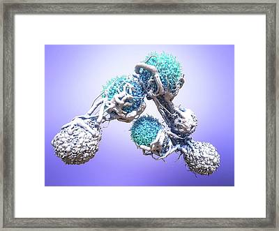 T Cells Attacking Cancer Cells Framed Print by Maurizio De Angelis