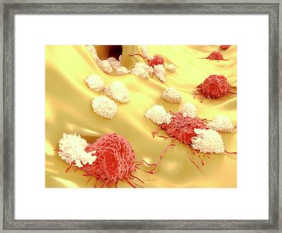 T-lymphocytes And Cancer Cells Framed Print by Juan Gaertner