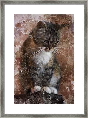 Tabby Framed Print by Ron Jones
