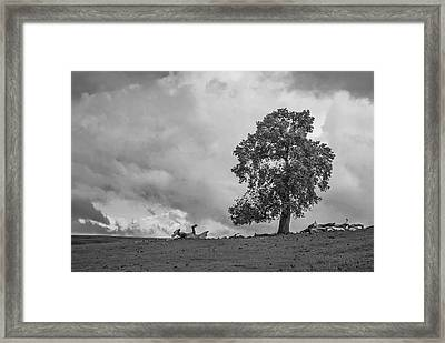 Table Mountain Oak Tree Framed Print