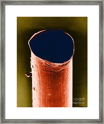 Tail Of An Iud Sem Framed Print by David M. Phillips