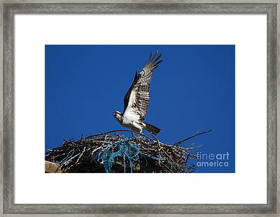 Take-off Framed Print