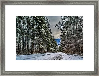 Tall Pines Framed Print by Randy Scherkenbach