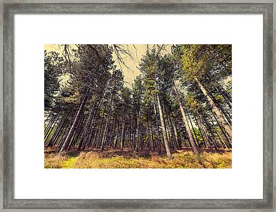Tall Trees Framed Print by Svetlana Sewell