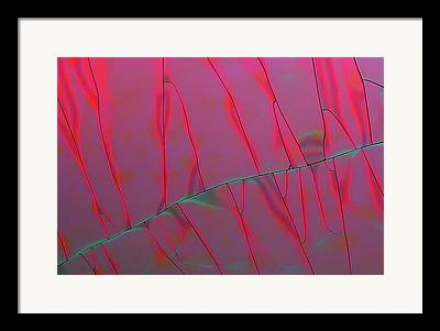 Tannic Acid Framed Prints