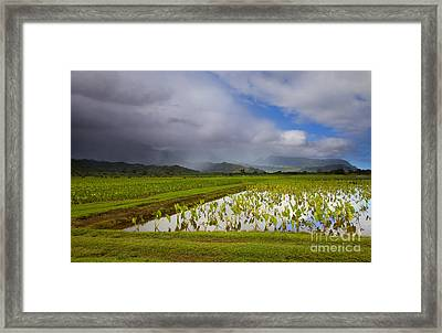 Taro Storm Framed Print by Mike  Dawson
