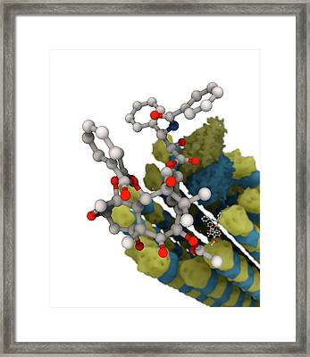 Taxol Chemotherapy Drug And Microtubule Framed Print by Ramon Andrade 3dciencia/science Photo Library