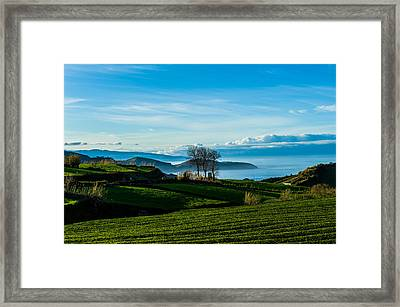 Tea Trees Framed Print