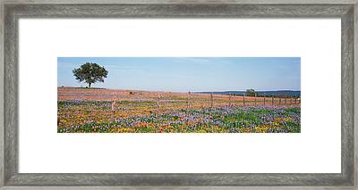 Texas Bluebonnets And Indian Framed Print