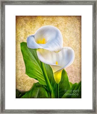 Textured Calla Lilies Framed Print