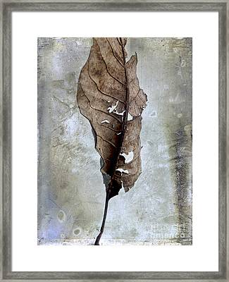 Textured Leaf Framed Print by Bernard Jaubert