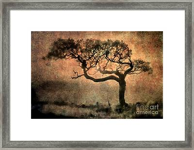 Textured Tree In The Mist Framed Print by Ray Pritchard