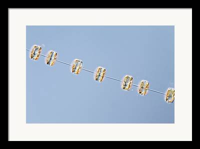 Diatoms Framed Prints