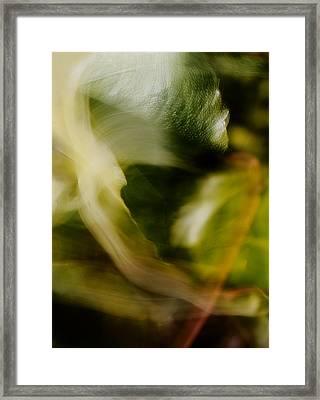 The Bear Framed Print by Mah FineArt
