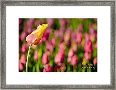 The Chosen One Framed Print by Nick  Boren
