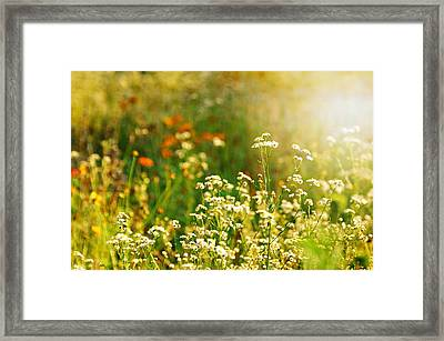 Summer Love Framed Print