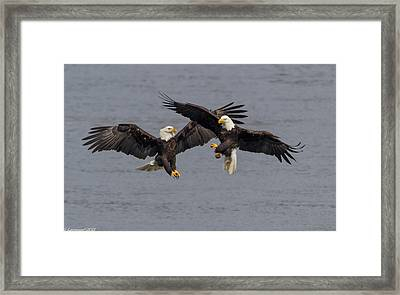 The Dance  Framed Print by Glenn Lawrence