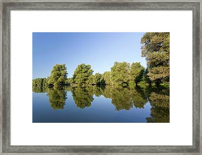 The Gemenc Forest In The Danube-drava Framed Print by Martin Zwick
