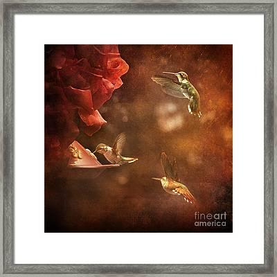 The Hummingbird Feeder Framed Print by Cindy Singleton