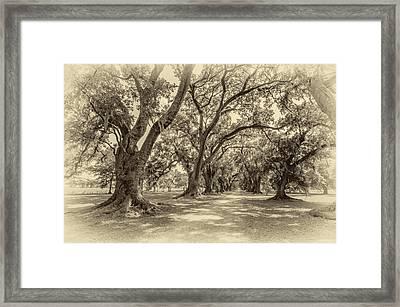The Lane Sepia Framed Print by Steve Harrington