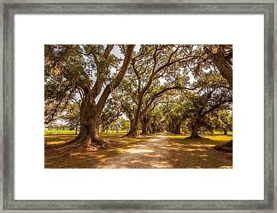 The Lane Framed Print by Steve Harrington