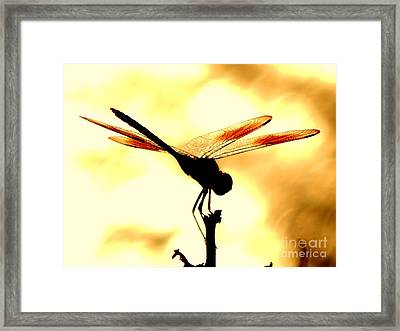 The Light Of Flight Upon The Mosquito Hawk At The Mississippi River In New Orleans Louisiana Framed Print