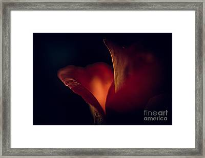 The Light Within Framed Print by Patricia Trudell