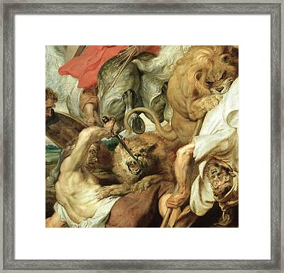 The Lion Hunt Framed Print by Peter Paul Rubens