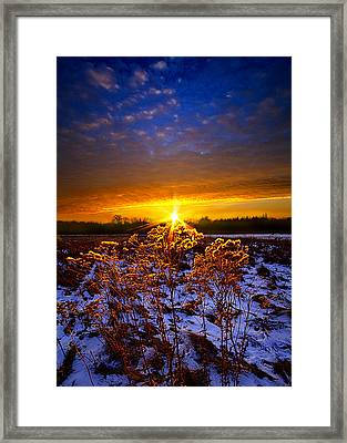 The Little Things Framed Print by Phil Koch