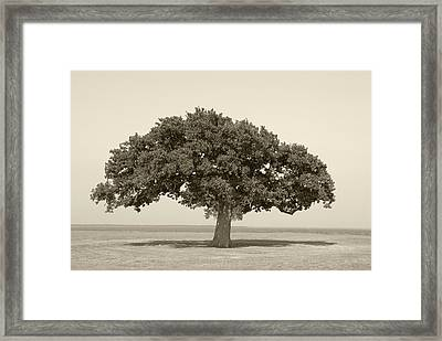 The Lonely Tree Framed Print by Charles Beeler