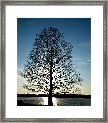 Framed Print featuring the photograph The Lonely Tree by Lucy D