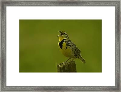 The Meadowlark Sings Framed Print