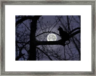 The Moon Watcher Framed Print by Susan Leggett