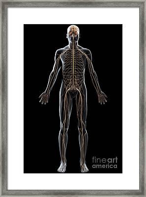 The Nerves Of The Body Framed Print
