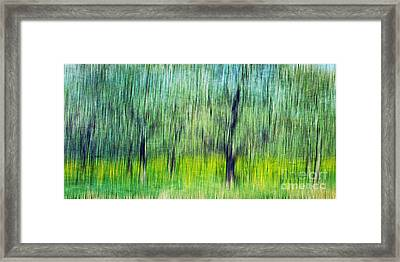 The Orchard Framed Print by Darren Fisher