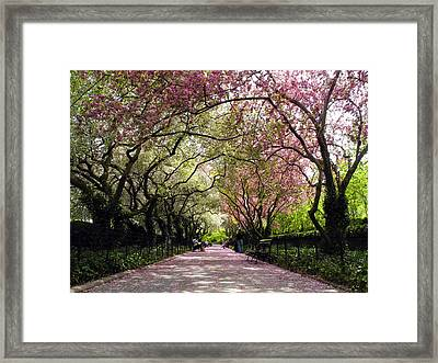 The Path Framed Print by Yue Wang