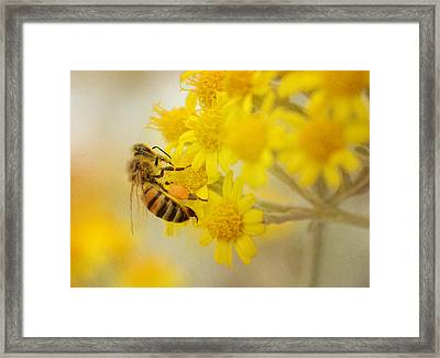 The Pollinator 2 Framed Print
