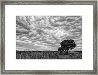 The Right Tree Framed Print by Jon Glaser