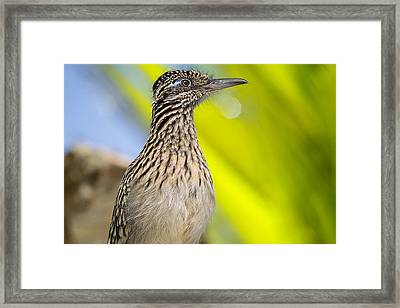 The Roadrunner  Framed Print by Saija  Lehtonen